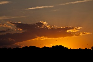 Laaerberg Sunset